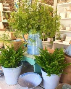 Floral Arrangements Rosemarie Durr Pottery Castlecomer